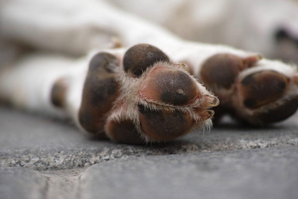 lutto Lutto per un animale domestico Morte di un animale domestico 1024x683